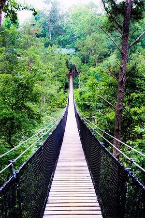 Suspension bridge over Snake Creek