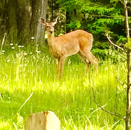 Baileys Harbor, WI: A friend along the path