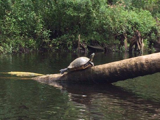 Jupiter, FL: There's plenty of wildlife on the river