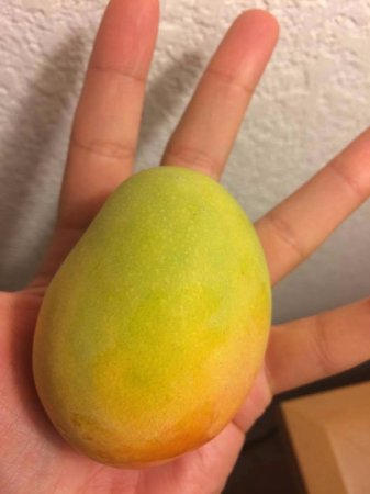East End, Grand Cayman: hand picked mangoes !