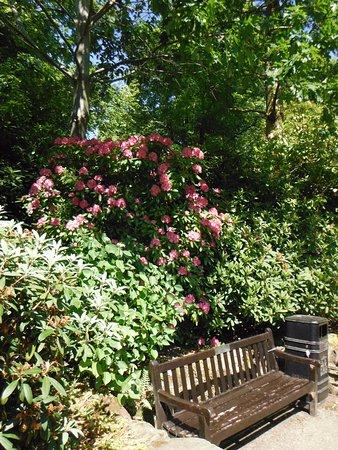 Shrewsbury, UK: lovely flowers, plenty of seating