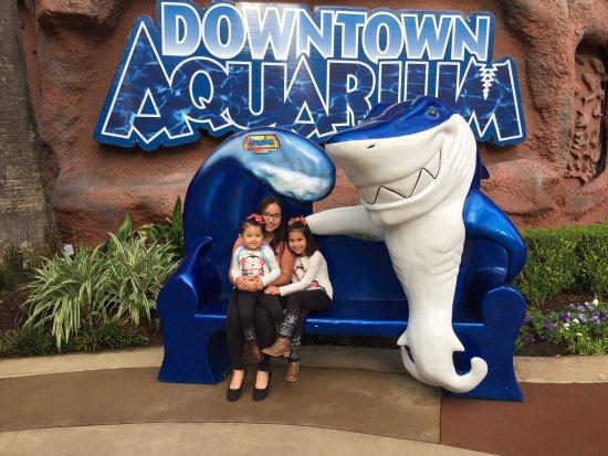 Bilde fra Downtown Aquarium