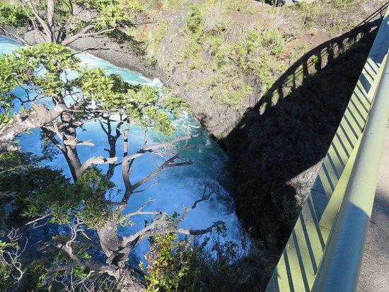 Parque Nacional Vicente Perez Rosales: bridge and tree and river