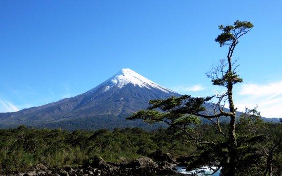 Parque Nacional Vicente Perez Rosales: Osorno volcano and 'bonsai' tree