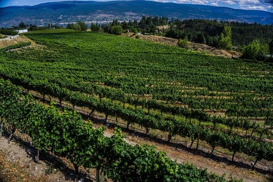 Summerland, Canada: Dirty Laundry Winery