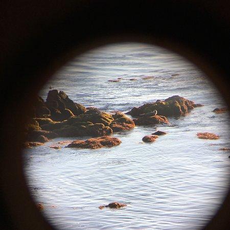 Spindrift Inn: seal on rock