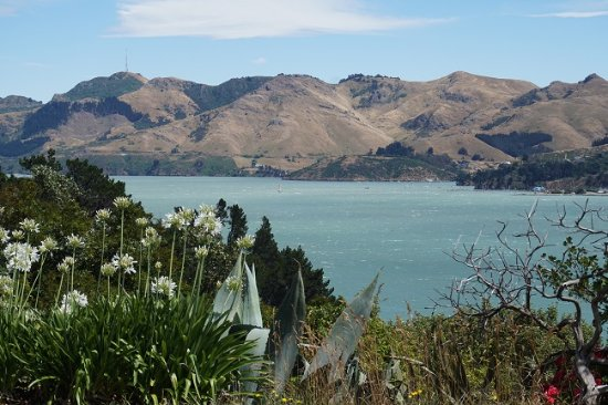 Lyttelton, New Zealand: Gorgeous view from Diamond Harbour Lodge