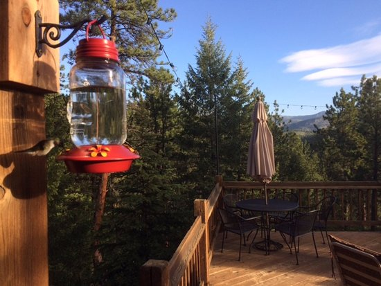 Evergreen, CO: View from the deck. Humming birds incl