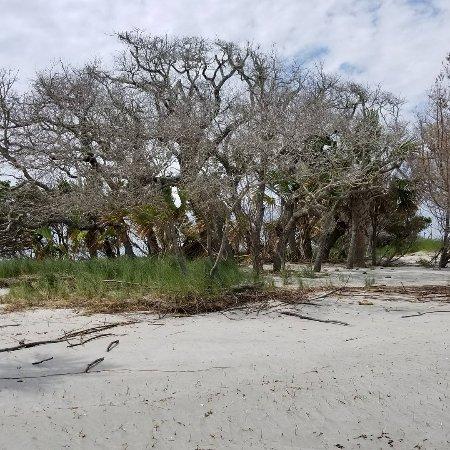 Edisto Island, Karolina Południowa: IMG_20170615_185331_146_large.jpg