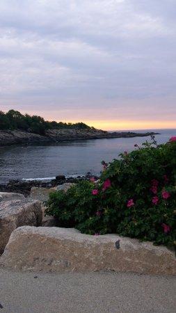 Perkins Cove: Vue de la mer, des roches et même d'un rosier sauvage qui poussent