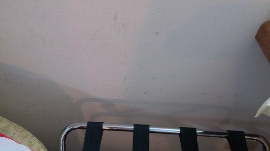 Hotel Delta Florence: paredes de las habitaciones