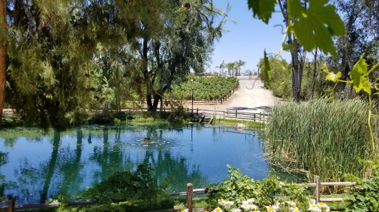 Temecula, CA: Lake at winery.