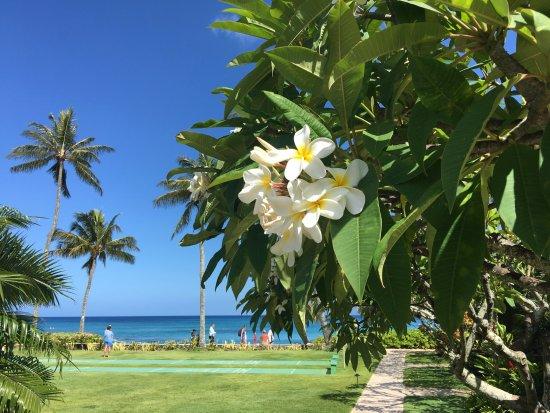 The Mauian Hotel on Napili Beach: Paradise