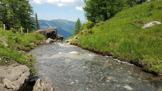 Lauenen, Switzerland: 20170620_131215_large.jpg