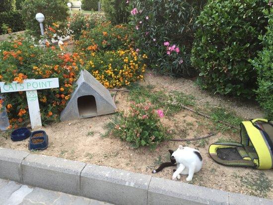 Espace Pour Les Chats Dans Les Jardins Picture Of