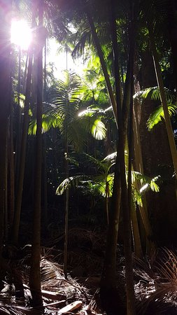 The Palm Grove Section of the Tamborine National Park