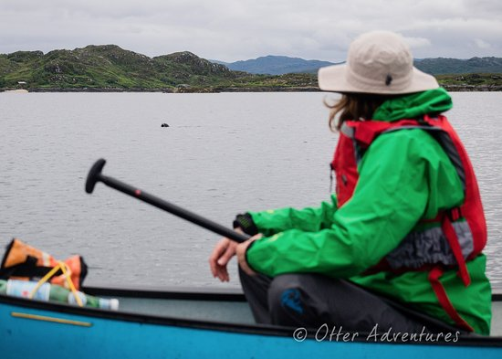 Strontian, UK: Seal spotting is one of our favourite ways to pass time during a canoe adventure