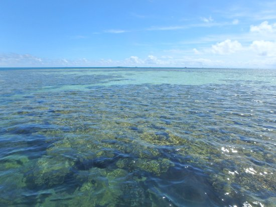 Kaneohe, HI: coral reef in the bay