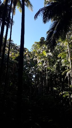 Tamborine Mountain, Australia: The Palm Grove Section of the Tamborine National Park