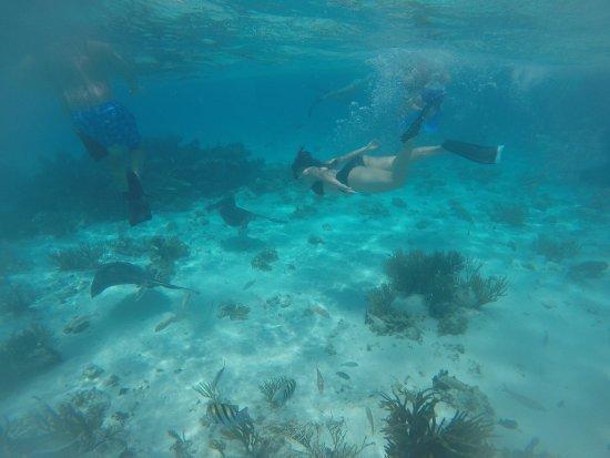 Tours Cayman: photo8.jpg