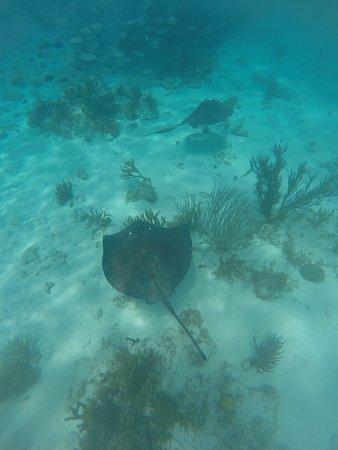 Tours Cayman: photo9.jpg