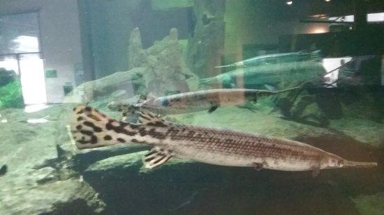 National Mississippi River Museum & Aquarium 사진