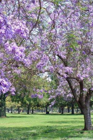 Westminster Memorial Park Orange County California