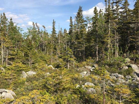 Gorham, Nueva Hampshire: photo0.jpg