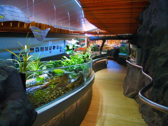 Turangi, Nieuw-Zeeland: Our freshwater aquarium showcasing our native aquatic species.