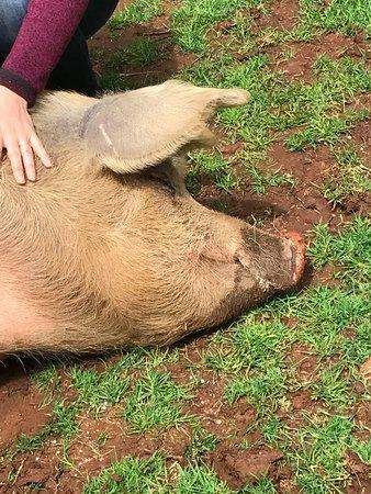 Grass Valley, CA: Enjoying her tummy rubs.