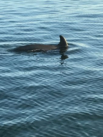 Bradenton Beach, FL: There she is -- a mommy with her baby