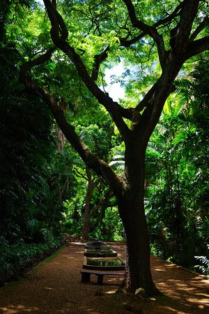 Walking Path in the Allerton Gardens Picture of Allerton Garden