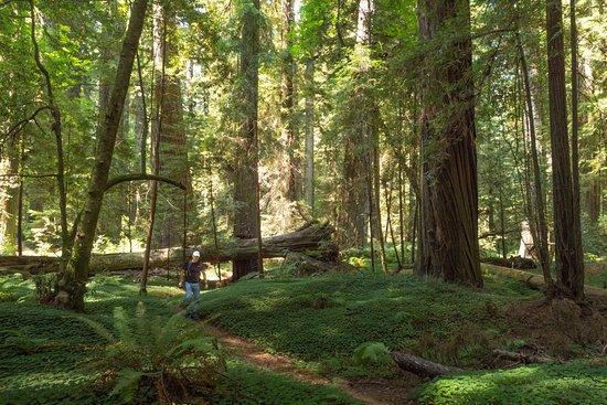 Weott, Калифорния: Walking the wooded paths