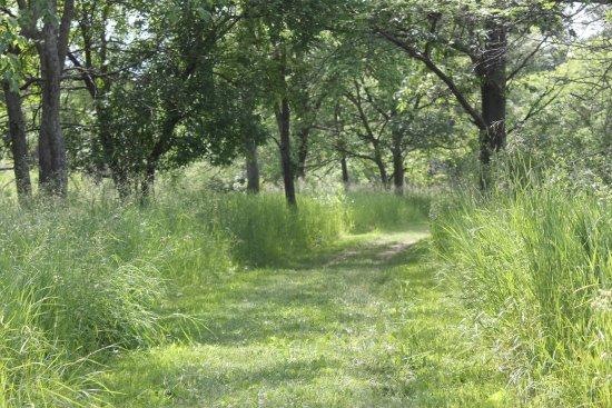 Stony Creek Metropark: the trail area
