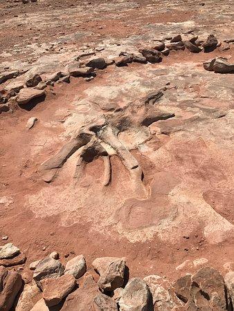 Tuba City, AZ: Ancient fossils