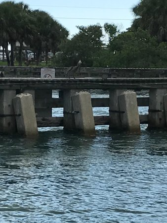 Nokomis, FL: A lone pelican on the dock