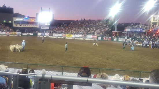 Reno Rodeo Cattle Drive: 20170617_204750_large.jpg