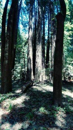 Elk, CA: FB_IMG_1498096481089_large.jpg