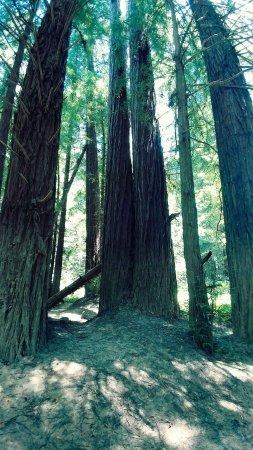 Elk, CA: FB_IMG_1498096469962_large.jpg