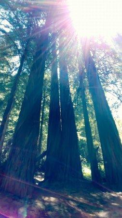 Elk, CA: FB_IMG_1498096467115_large.jpg
