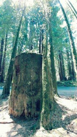 Elk, CA: FB_IMG_1498096459039_large.jpg