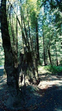 Elk, CA: FB_IMG_1498096463242_large.jpg