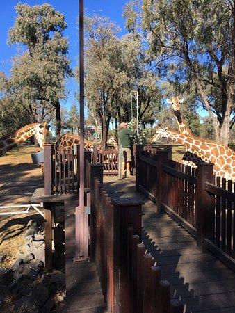 Dubbo, Australia: photo1.jpg