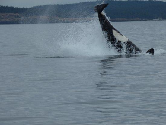 Steveston Seabreeze Adventures & Whale Watching Foto