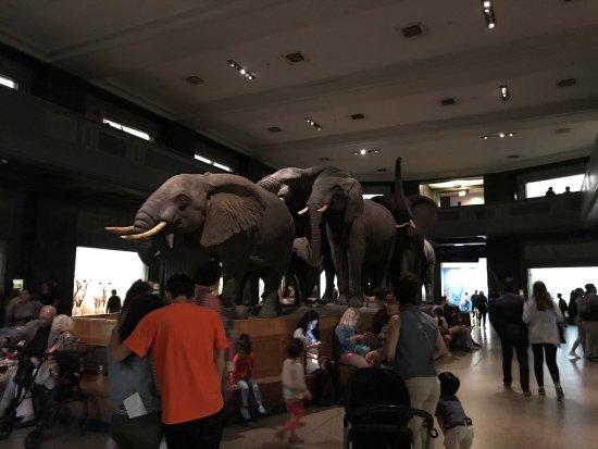 American Museum of Natural History: photo1.jpg