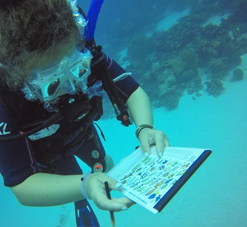 Kralendijk, Bonaire: Dive Friends was a great help to me and my students who conducted fish ID surveys from Reef.org