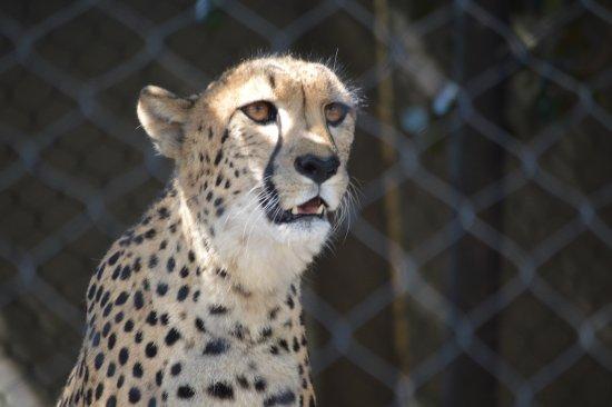 San Diego Zoo Safari Park Photo
