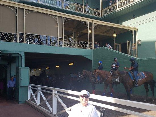 Arcadia, Kalifornia: Horses!