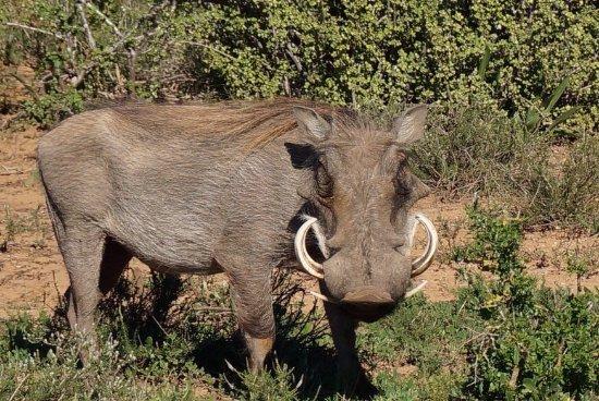 Addo Elephant National Park, Sudáfrica: photo1.jpg