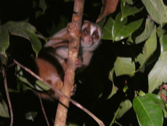 Фотография Borneo Nature Lodge